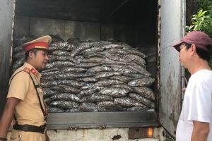 Đà Nẵng: Bắt xe tải chở cá bốc mùi hôi nồng nặc