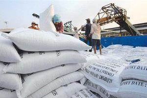 Xuất khẩu gạo sẽ cán đích trên 3,1 tỷ USD