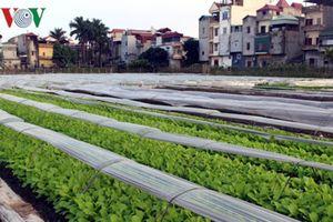 Xuất khẩu nông sản còn 'vướng' nhiều hàng rào kỹ thuật