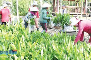 Kiểm soát thị trường giống cây trồng: Tránh thiệt thòi cho nông dân