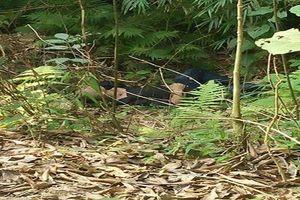 Thi thể nam thanh niên với nhiều vết bầm sau 2 ngày mất tích ở Lào Cai