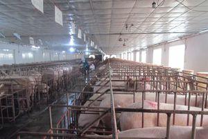 Hưng Yên huy động mọi nguồn lực tái cơ cấu nông nghiệp
