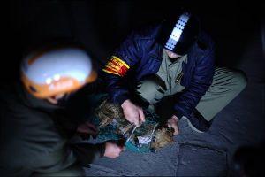 Phản ứng của người dân khi Hà Nội thành lập tổ săn bắt chó thả rông