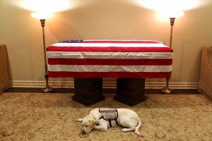 Hình ảnh cảm động chú chó của cố Tổng thống Bush túc trực bên linh cữu