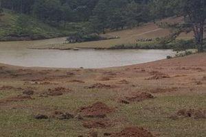 Lâm Đồng: Đào hố chiếm đất, phá nát đồi cỏ hồng ngay giữa mùa hội