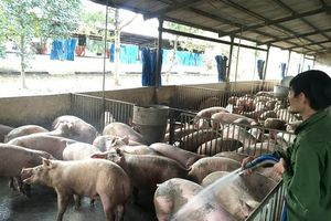 Liên kết trong chăn nuôi để tăng khả năng cạnh tranh
