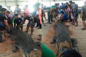 Bắt cá sấu nặng 500 kg nghi ăn thịt người