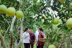 Hà Nội: Phát triển các vùng cây ăn quả sản xuất ứng dụng công nghệ cao