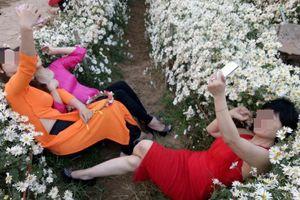 Ba người phụ nữ nằm đè bẹp luống hoa cúc họa mi, vắt chân selfie gây bức xúc