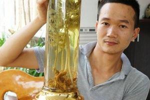 Quảng Nam: Loại củ xù xì, nhỏ xíu mà hằng tháng 'ẵm' hơn 4 tỷ đồng