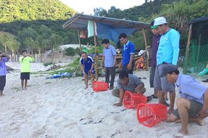 'Cứu hộ' rùa biển