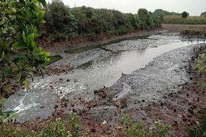 Sở TN&MT tỉnh Quảng Ninh: Dự án nuôi tôm thuộc Tập đoàn BimGroup chưa có giấy phép xả thải