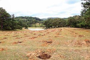 Công an vào cuộc vụ lấn chiếm đồi cỏ hồng để trồng cà phê