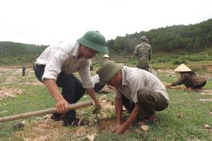 Nghệ An: Sẽ giao gần 110 nghìn ha rừng gắn với đất lâm nghiệp
