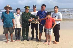 Quảng Trị: Thả con vích nặng 14 kg về biển
