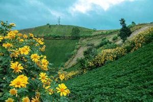 Lễ hội hoa dã quỳ nơi núi lửa Chư Đang Ya