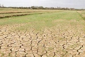 Hạn hán kéo dài đe dọa mùa màng ở Quảng Trị