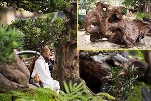 Ngỡ ngàng ngắm bộ ba cây cảnh được hét giá hơn 2 tỉ đồng