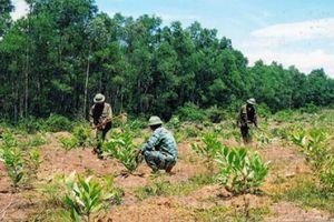 Nghệ An sẽ giao gần 110 nghìn ha rừng gắn với đất lâm nghiệp