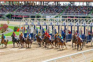 Hà Nội sẽ có trường đua ngựa rộng hơn 100 ha