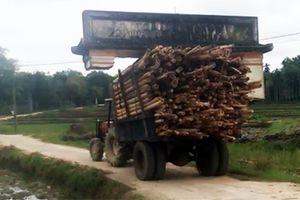 Xe công nông chở keo 'khiêng' luôn cổng làng ở Quảng Nam