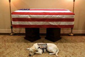 Dân mạng dậy sóng vì chú chó trung thành của Bush 'cha'