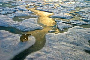Nhóm Ngân hàng Thế giới tài trợ 200 tỷ USD cho ứng phó biến đổi khí hậu
