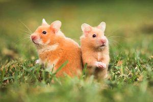 Hình ảnh: Những loài động vật bị đe dọa vì biến đổi khí hậu