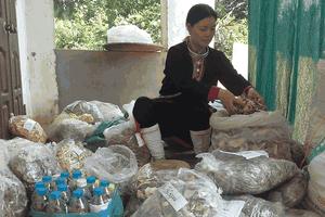 Vị lương y phát triển bài thuốc đau nhức xương khớp đến hàng ngàn bệnh nhân
