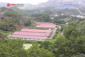 Quảng Ninh: Dân 'nghẹt thở' vì trang trại của Công ty CP Thiên Thuận Tường