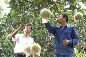 Gia Hòa: Nông dân giàu lên nhờ phát triển cây ăn quả