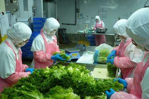 Nông sản Việt: Đẩy mạnh nhận diện thương hiệu, chinh phục thị trường xuất khẩu