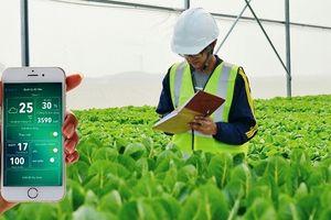Nông nghiệp TP. Hồ Chí Minh - 'Quả ngọt' sau 10 năm thực hiện Nghị quyết 'tam nông'