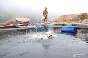 Nghề nuôi cá lồng trên lòng hồ thủy điện lớn thứ 2 ở Nghệ An