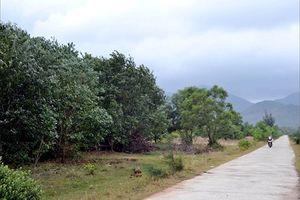 Đất rừng đứng tên nhiều cán bộ ở Huế: Những hoài nghi cần làm rõ