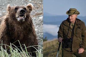 Tổng thống Putin kể chuyện bị gấu vây trong rừng ở Siberia