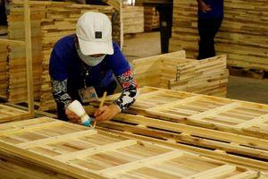 Ngành gỗ Việt hưởng lợi hay vạ lây từ cuộc chiến Mỹ - Trung?