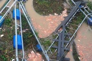 Mưa lớn chưa từng có, dân nuôi cá bè đau đớn nhìn tiền tỷ trôi sông