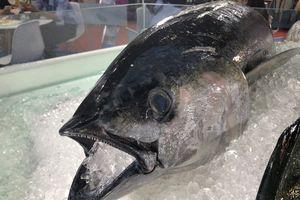 Xuất khẩu cá ngừ tăng trưởng tốt