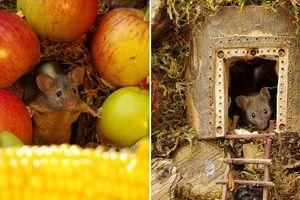 Phát hiện gia đình chuột sống sau vườn nhà, chàng trai xây cho chúng ngôi làng tí hon
