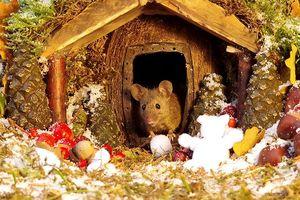 Ngôi nhà cổ tích lung linh mùa Giáng sinh của gia đình nhà chuột