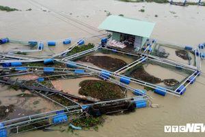 Hơn 40 lồng cá hàng tỷ đồng bị phá tanh bành ở Quảng Nam