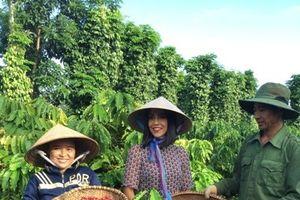 NESCAFÉ mời phóng viên quốc tế tới quảng bá cà phê Việt ra thế giới