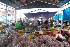 Kiên Giang: Nguồn lợi hải sản đang suy giảm mạnh