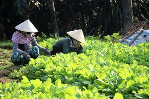 Quản lý vệ sinh an toàn thực phẩm sản phẩm nông nghiệp