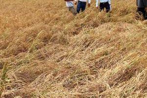 Giúp nhà nông ứng phó biến đổi khí hậu