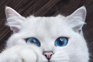 10 sinh vật sở hữu đôi mắt đẹp nhất hành tinh