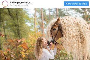 Sở hữu 'mái tóc' giống công chúa tóc mây, chú ngựa bỗng thành ngôi sao