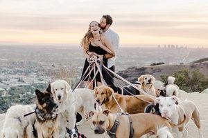 'Phát hờn' với màn cầu hôn lãng mạn bằng 16 chú chó siêu đáng yêu