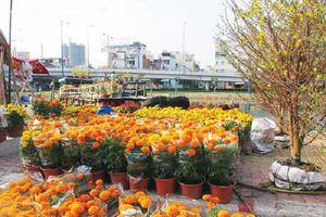 Đồng Tháp: Sẽ cung cấp gần 3 triệu giỏ hoa dịp Tết Kỷ Hợi